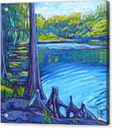 Moss And Cypress Acrylic Print