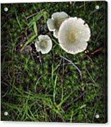 Moss And Fungi Acrylic Print