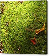 Moss And Leaves Acrylic Print