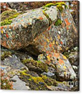 Moss And Lichens In The Scottish Highlands Acrylic Print