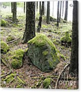 Moss-covered Boulder Acrylic Print