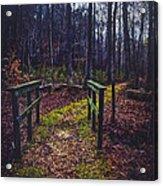 Moss Covered Path Acrylic Print