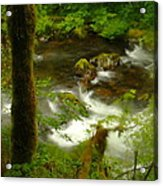 Moss Covered Trees Foregound Eagle Creek Acrylic Print