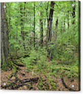 Moss Covered Trees In Forest, Lord Acrylic Print