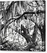 Moss In A Magical Land Acrylic Print