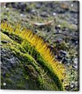 Moss In The Light Acrylic Print