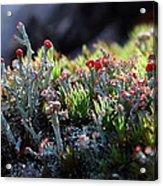 Moss Acrylic Print