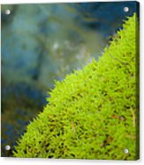 Moss On River Acrylic Print