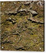 Moss On Rock Acrylic Print
