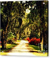 Moss On The Trees At Monks Corner In Charleston Acrylic Print