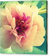 Moss Rose Abstract Acrylic Print