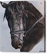 Mossandi Darwin Acrylic Print