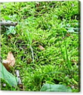 Mossy Bed Acrylic Print