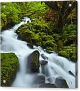 Mossy Creek Cascade Acrylic Print