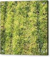 Mossy Grass Acrylic Print