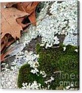 Mossy Leaves Acrylic Print