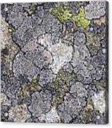 Mossy Mouldy Rock Texture Acrylic Print