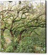 Mossy Oak Acrylic Print
