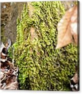 Mossy Rock Abstract 2013 Acrylic Print