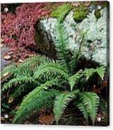 Mossy Rock And Fern Acrylic Print