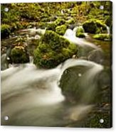 Mossy Rocks Along Lavis Brook In The Acrylic Print