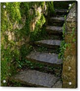 Mossy Steps Acrylic Print