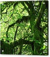 Mossy Tree Acrylic Print by Athena Mckinzie