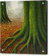 Mossy Trees Acrylic Print
