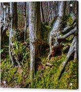 Mossy Woodland  Acrylic Print