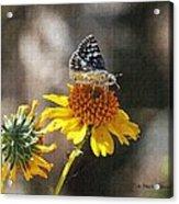 Moth And Flower Acrylic Print