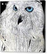 Snow Owl Acrylic Print by Tyler Schmeling