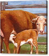 Mother And Baby Cow Acrylic Print