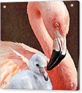 Mother And Baby Flamingo Acrylic Print