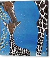 Mother And Baby Giraffe Acrylic Print