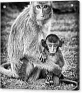 Mother And Baby Monkey Black And White Acrylic Print