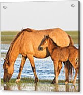 Mother And Foal Acrylic Print by Bob Decker