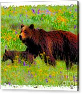 Mother Bear And Cub In Meadow Acrylic Print