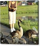 Mother Goose Acrylic Print by Guy Ricketts