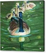 Mother Goose  Acrylic Print