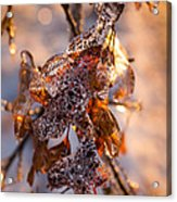 Mother Nature's Christmas Decorations - Golden Oak Leaves Jewels Acrylic Print