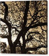Mother Nature's Design Acrylic Print