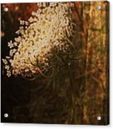 Mother Nature's Lace Acrylic Print