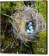Mother Of Four Acrylic Print by Laura Brightwood