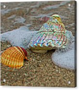 Mother Of Pearl Acrylic Print by Robert Bascelli