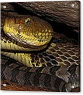Mother Snake Acrylic Print