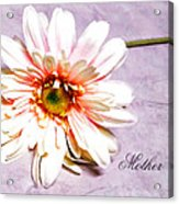 Mother's Gerber Daisy Acrylic Print