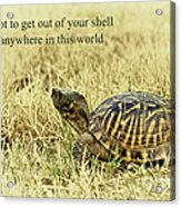 Motivating A Turtle Acrylic Print by Robert Frederick