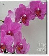 Mottled Orchid 1 Acrylic Print