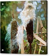 Moulting Acrylic Print