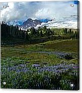 Mount Baker Lupine Meadows Acrylic Print